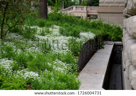 Richly overgrown flowerbeds with white flowering perennials yellow tufts covering the flowerbeds near the house, a black steel plate replaces the retaining wall separating the flowerbed.