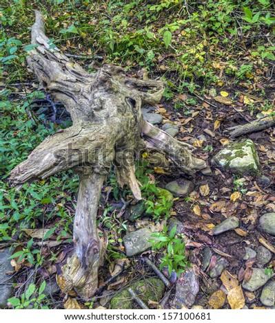 Ricketts Glen harbors Glens Natural Area, a National Natural Landmark, logs in forest