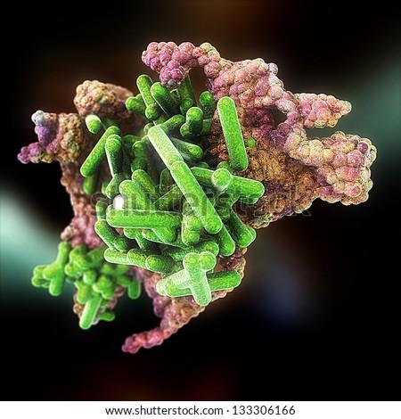 Rickettsia Bacteria Colony