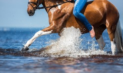rider on a horse playing in water in summer, detail