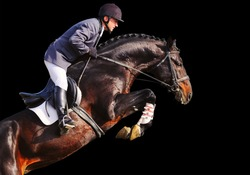 Rider on bay horse in jumping show, isolated on black