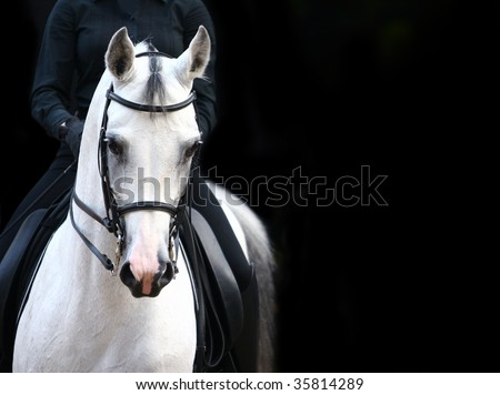 rider on white arab