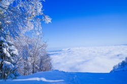 Rime forest and sea of clouds