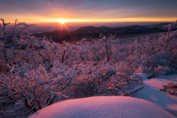 Rime ice lines the trees at sunrise in Shenandoah National Park, Virginia.