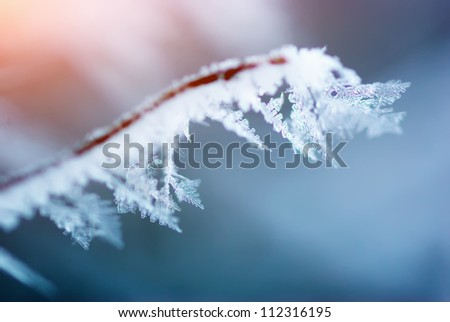 Rime on branch. Element of design. - stock photo
