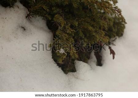 ring detail in snow shot Stok fotoğraf ©