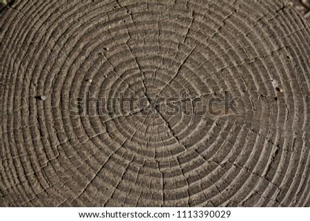 Ring on tree stomp