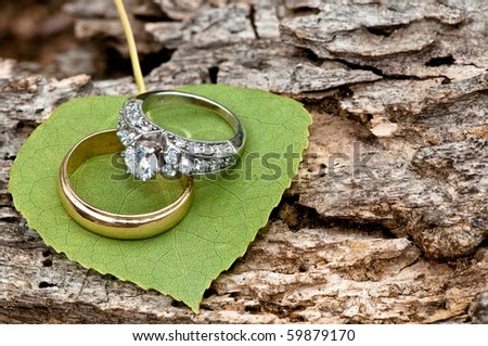 Rings on Aspen leaf at Estes Park, CO