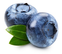 Ripe and juicy fresh picked blueberries Clipping Path