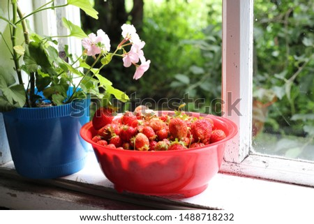 Ripe and large strawberries in a large red plate on the windowsill of a village house. Juicy and vibrant wholesome food.
