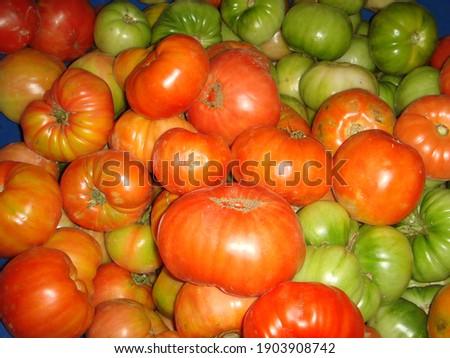 Ripe and unripe fresh organic tomatoes. Olgun ve olgunlaşmamış köy domatesi. Turşuluk.  Stok fotoğraf ©