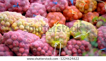 ripe apples collected in a mesh bags for juice industry