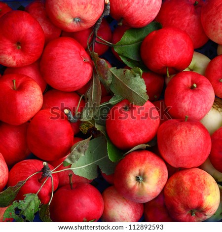 Ripe apples, pink with green leaves piled up in a blue box