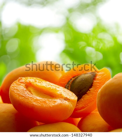 Ripe apricots on young green leaves background