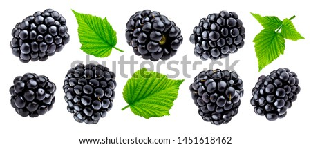 Ripe blackberry isolated on white background with clipping path. Fresh summer wild berries closeup. Detailed Blackberry collection with leaves