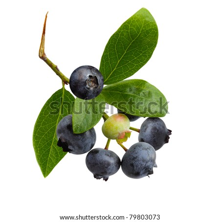 Ripe blueberry on branch isolated on white background