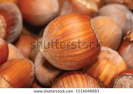 ripe brown hazelnut nuts in shell on a background of nuts close-up macro. macro