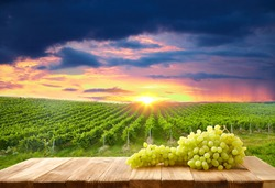 Ripe bunch of grapes on a wooden table against the background of grape plantations at sunset in Tuscany, Italy. Picturesque winery, vineyard. Sunset is a warm light. Eco. Stable