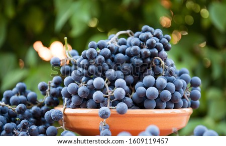Ripe bunches of grapes in a clay bowl with a slide on the background of the garden. Organic berries. Healthy eating