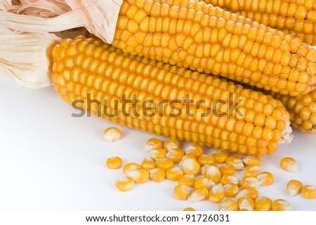 Ripe corn against bright background