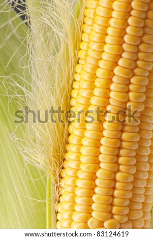 Ripe corn on the cob with green leaves