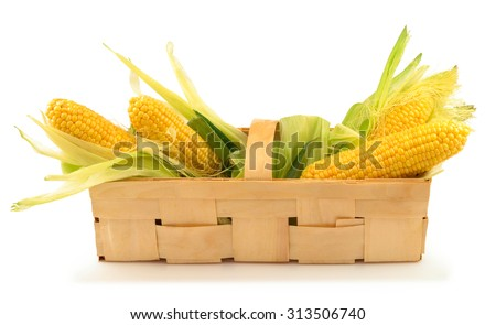 Ripe corn with green leaves in the wooden box isolated on white background