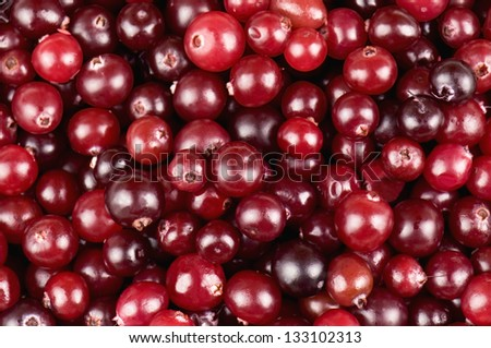 ripe cranberries in the photo
