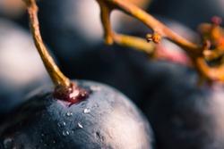 ripe dark grape close up. wooden background