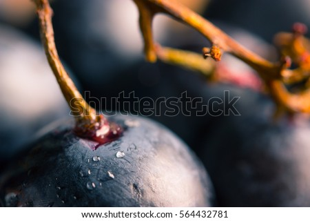 ripe dark grape close up. wooden background