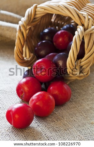 Ripe fresh picked plums scattered from wicker basket closeup