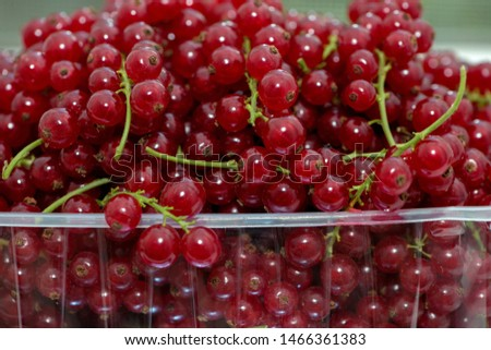 Ripe fruits of red currant on thin green stalks. #1466361383