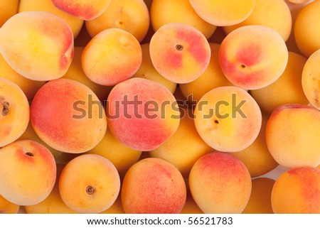 Ripe fruits of Ume (Prunus mume or Japanese apricot)