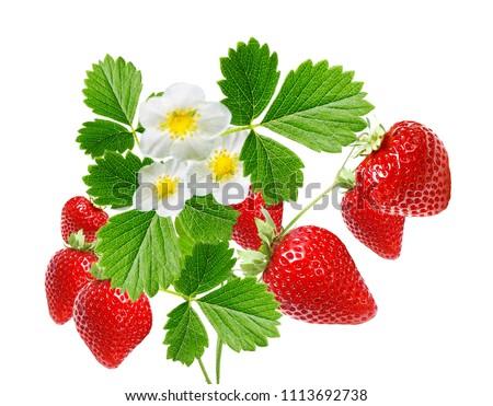 ripe garden freshness strawberries
