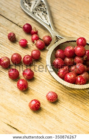 Ripe gojy berries on the bush branch on vintage plate #350876267