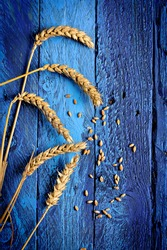 ripe golden wheat and grains
