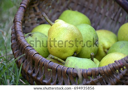 Ripe green pears in a basket on the grass. Selective focus #694935856