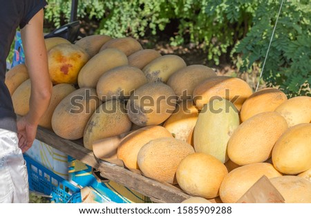 Ripe juicy melons in a spontaneous market on the side of the road, black sellers sell oriental sweets without a license to sell and quality and safety guarantees for the buyer, maturity test
