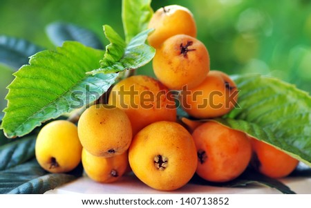 Ripe loquats on branch