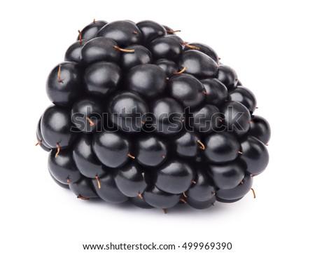 Ripe lying blackberry isolated on white background with clipping path. One of the best isolated blackberries that you have seen. Blackberry, isolated blackberry.