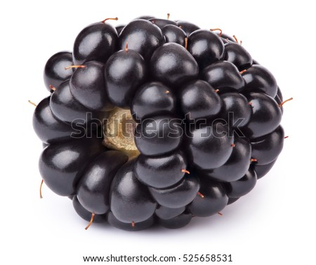 Ripe lying blackberry isolated on white background with clipping path. One of the best isolated blackberries you have seen. Blackberry isolated, blackberries