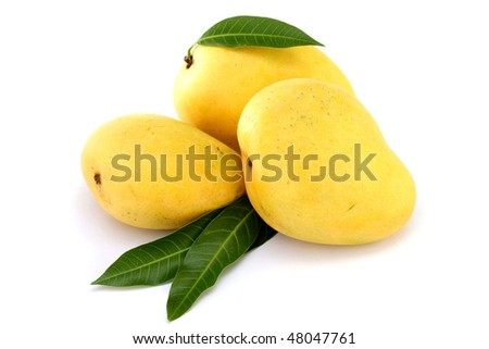 Ripe mango in the hands