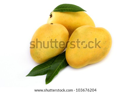 Ripe mangoes on white