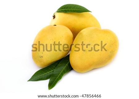 Ripe mangoes on white