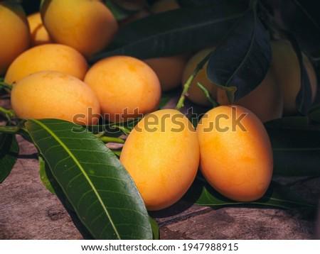 Ripe Maprang or marian plum,  seasonal Thai fruit. Stok fotoğraf ©