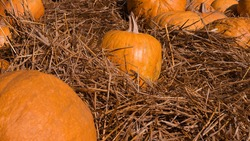 Ripe orange pumpkin in the hay, decorations for the Halloween holiday from a natural pumpkin.