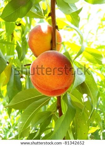 Ripe Organic Peach