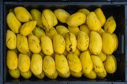 Ripe Philippine Mangoes