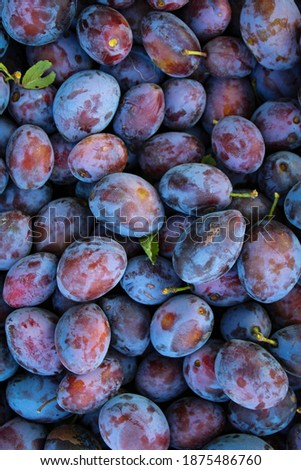 Ripe plums. Plum with a few leaves. Close up of fresh plums, top view. Macro photo food fruit plums. Texture background of fresh blue plums. Image fruit product. D'Agen French prune plum.