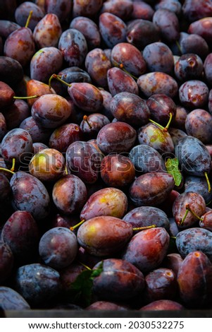 Ripe plums. Plums with a few leaves. Close up of fresh plums, top view. Macro photo food fruit plum. Texture background of fresh blue plums. Image fruit product. D'Agen French prune plum.
