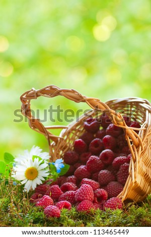 Ripe raspberries in the basket